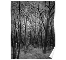 Scary Trees- Wine Shanty Track South Poster