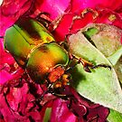 Merry Christmas Beetle by Anne van Alkemade