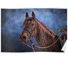 """The Arabian Horse"" Poster"