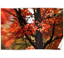 Maple tree Poster