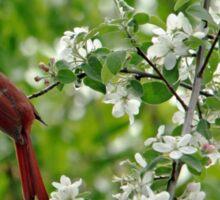 Bird And Blossoms Sticker