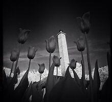 Tulips by Jean-François Dupuis