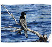 Darter Perched Over Tallow Creek Poster
