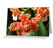 Orange & White Orchid (cambria & odontoglossum hybrid) Greeting Card