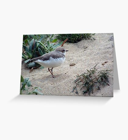 Sandpiper on the Sand Greeting Card