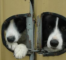 Mirror Dogs - Only Mummy Can Tell Them Apart by CasPhotography