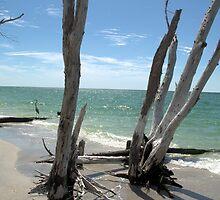Stumps at Stump Pass Florida, USA by Kim McClain Gregal