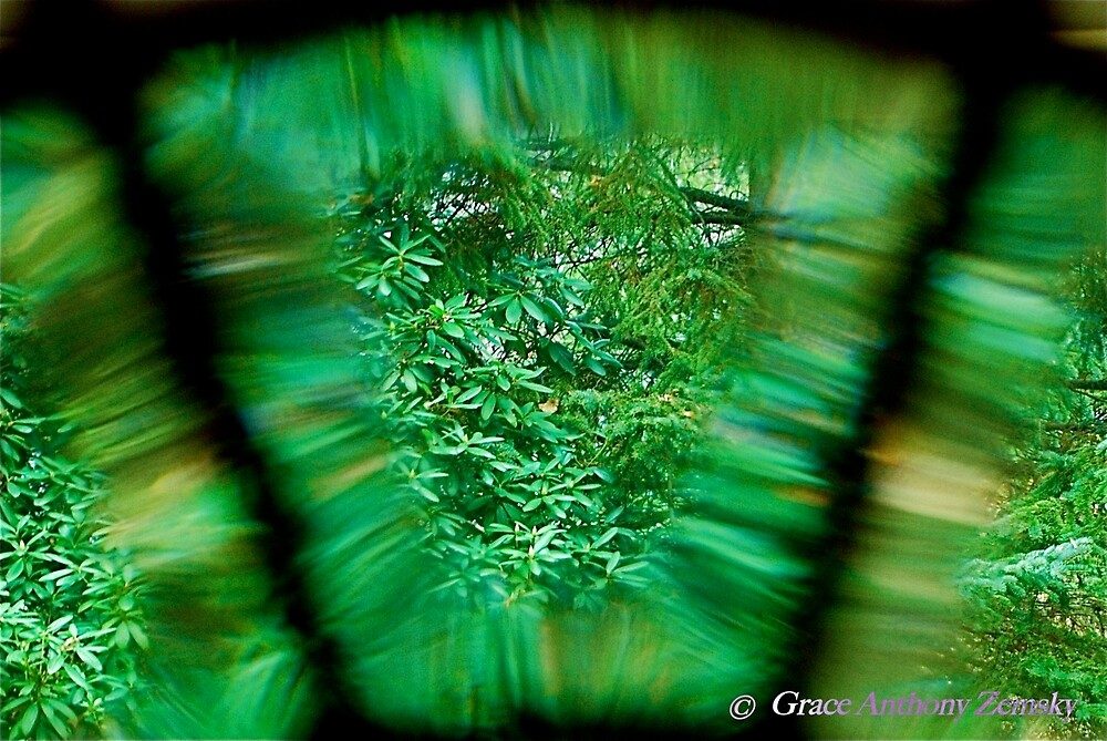 Through the Looking Glass by Grace Anthony Zemsky