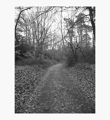 The Woodland Road Photographic Print