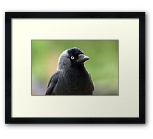 jackdaw Framed Print