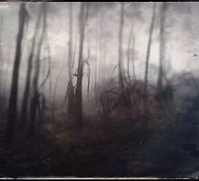 Tintype Trees by Geoff Smith