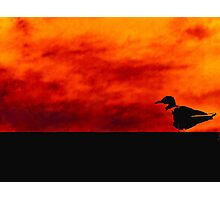 Doomed Seagull Photographic Print