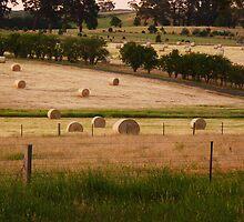 Harvest Fields by Meg Hart