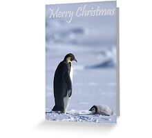 Emperor Penguins 2 - Merry Christmas Card Greeting Card