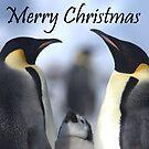Emperor Penguins 4 - Merry Christmas Card by Steve Bulford