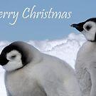 Emperor Penguins 6 - Merry Christmas Card by Steve Bulford