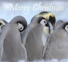 Emperor Penguins 8 - Merry Christmas Card by Steve Bulford