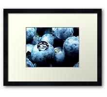 Blueberry Framed Print