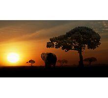 Sunset Elephant - Masai Mara Photographic Print
