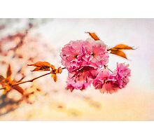 """""""Spring Blossoms"""" Photographic Print"""