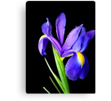 Single flower. Canvas Print