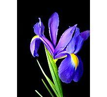 Single flower. Photographic Print