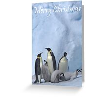 Emperor Penguins 11 - Merry Christmas Card Greeting Card