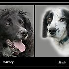 Barney & Teale by Chris Clark