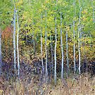 New Stand, Changing Colors, Grand Teton National Park, Wyoming by Alan C Williams