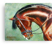 Aparee, Trakehner Stallion Canvas Print