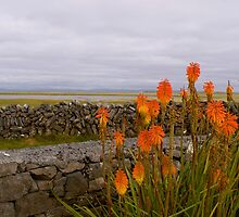 Flowers of Aran by Louise Fahy