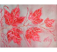 July Ruby Maples Photographic Print