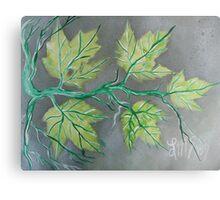 August Peridot Maples Canvas Print
