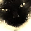 Look into my eyes by Annabelle Evelyn