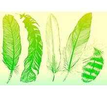 Lime Feathers Photographic Print
