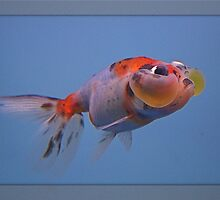 Bubble Eyed Fish by ccmerino