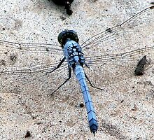 Dragon Fly 2 by Lorraine Armstrong