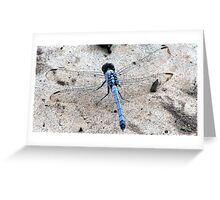 Dragon Fly 2 Greeting Card