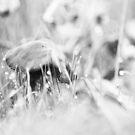 Mushroom 3 by Jessica Hardin