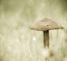 Mushroom 2 by Jessica Hardin