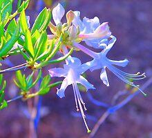 Fiery Fuchsia Flowers by Lorraine Armstrong