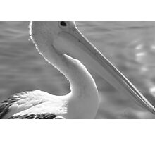 Pelican Head-(B&W) Photographic Print