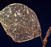 Wizened Magnolia Leaf by Manfred Belau