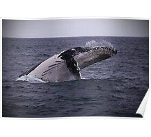 Water Breathing Beast :: Eden Poster