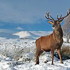 Deer-Stag by Grant Glendinning