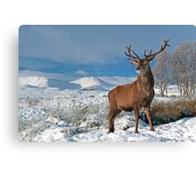 Deer-Stag Canvas Print