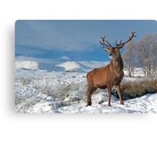 Deer-Stag Canvas Print