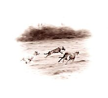 Wolfhounds Coursing Photographic Print