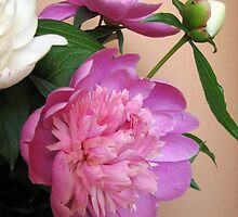 Pink and white bouquet of peonies  by OlgaBerlet