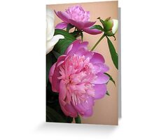 Pink and white bouquet of peonies  Greeting Card